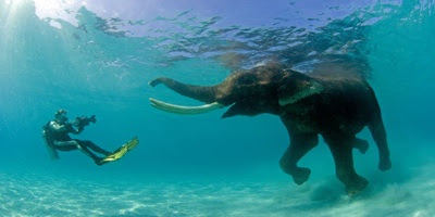 Diving india