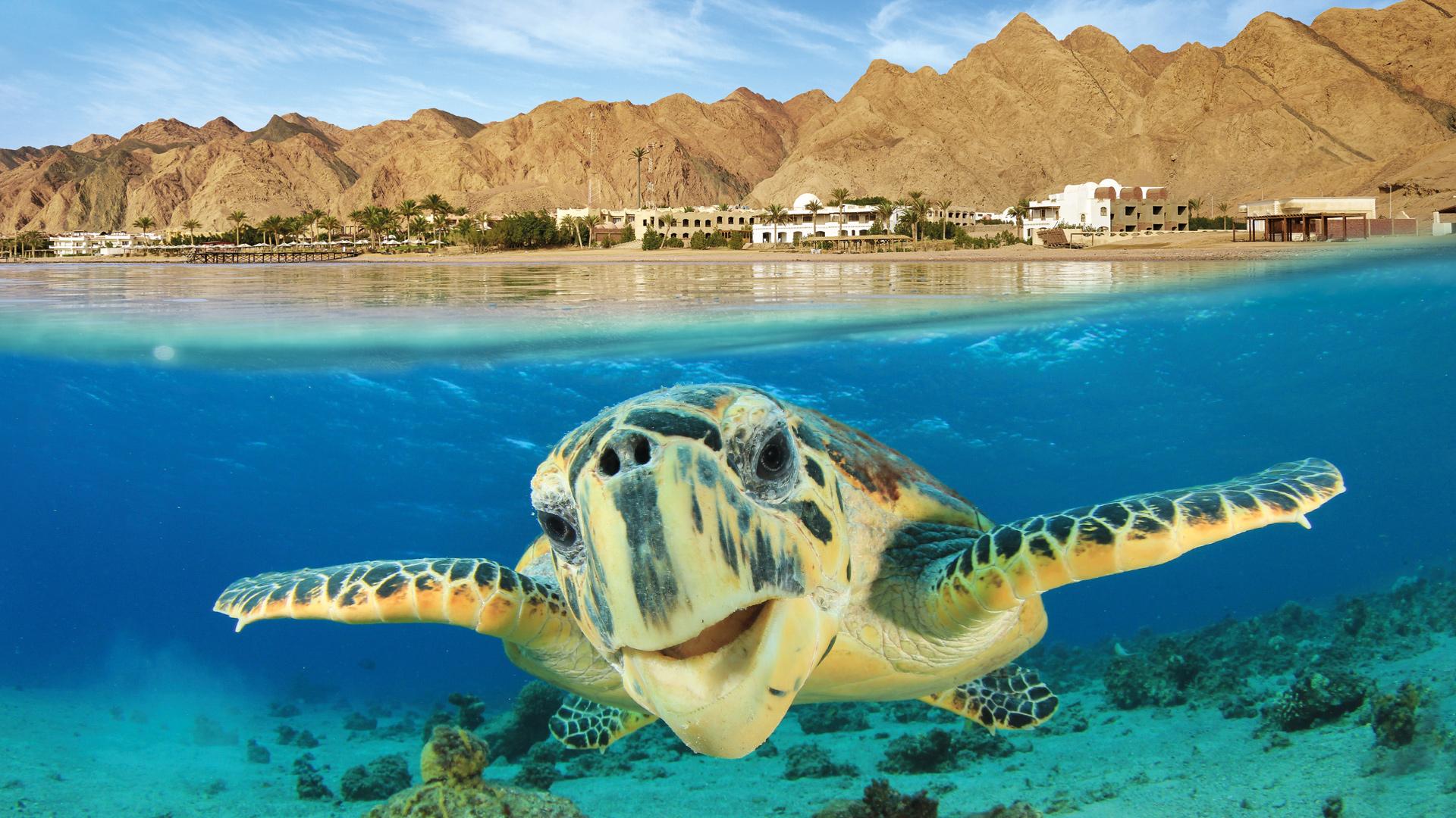 Egypt Vacation Spotlight